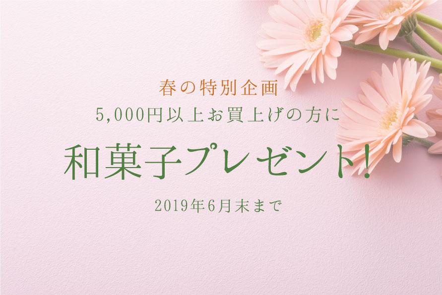 春の特別企画 和菓子プレゼント!